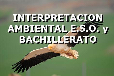 INTERPERTACION AMBIENTAL 2.jpg